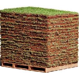 Preço de grama em Fazenda Rio Grande PR