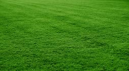 grama esmeralda em Carandaí