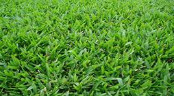 grama São Carlos em Teófilo Otoni