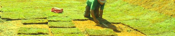 Plantio de grama esmeralda